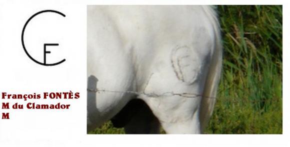 http://chevauxdecamargue.cowblog.fr/images/FERCLAMADOR.jpg