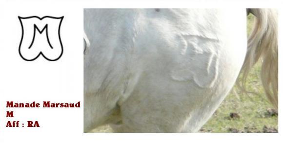 http://chevauxdecamargue.cowblog.fr/images/FERMARSAUD.jpg