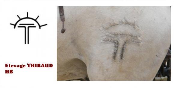 http://chevauxdecamargue.cowblog.fr/images/FERTHIBAULT.jpg