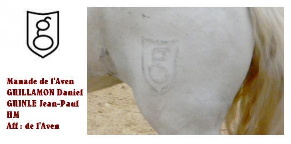 http://chevauxdecamargue.cowblog.fr/images/delaven.jpg