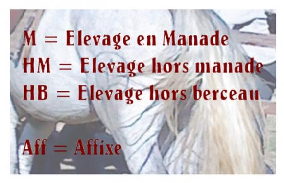 http://chevauxdecamargue.cowblog.fr/images/explications-copie-1.jpg