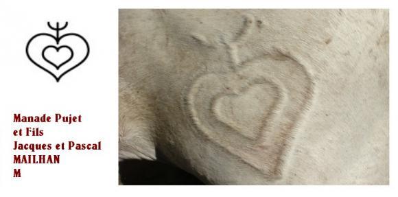 http://chevauxdecamargue.cowblog.fr/images/manadepugetetfilsmaillant.jpg